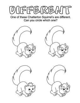 different squirrel
